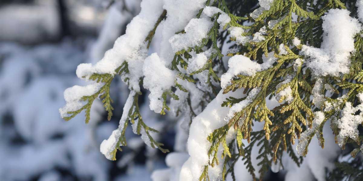 Trucos para mantener tu jardín bien cuidado en invierno