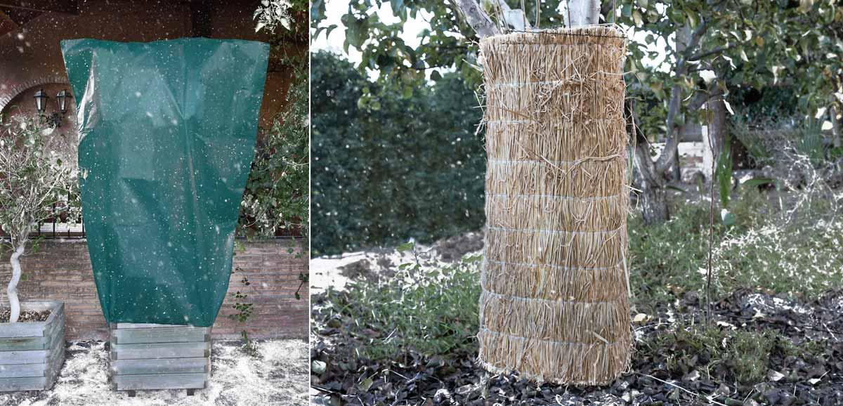 Fundas protección plantas invierno