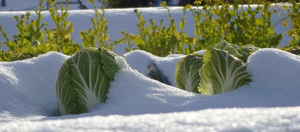 Cuidado jardín en invierno