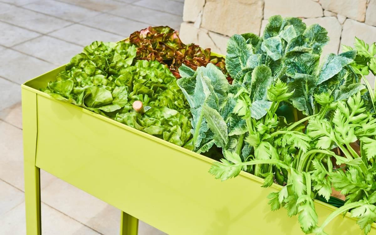 como instalar un huerto ecológico en tu jardín 1