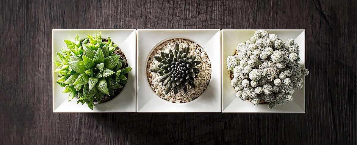Decora tu casa con un innovador Smart Planter