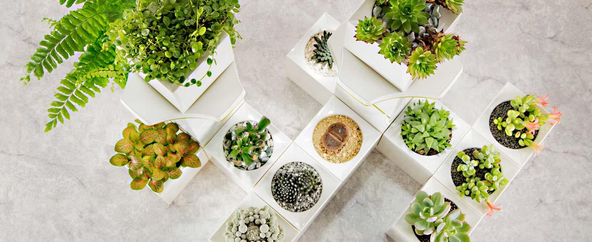 Decora tu casa con un smart planter 4