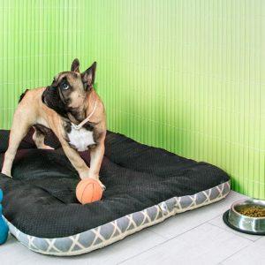 Protege tus paredes de tus mascotas gracias a Wall.y