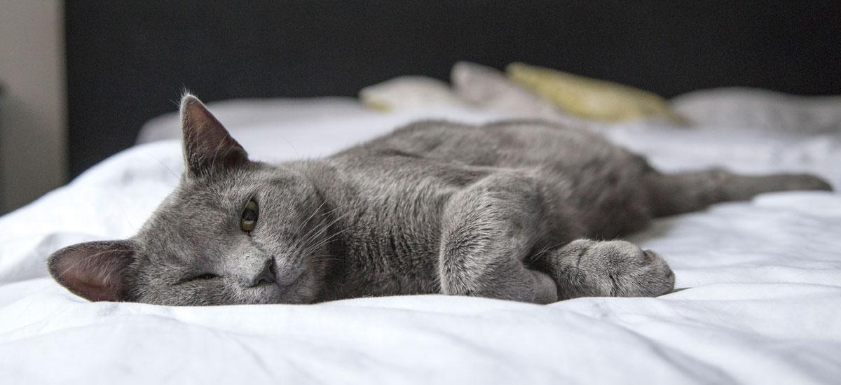 Sigue estos consejos para cuidar la higiene de tu gato