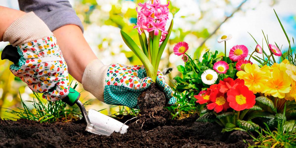 ¿Las plantas de tu jardín no florecen? ¡Descubre los motivos!