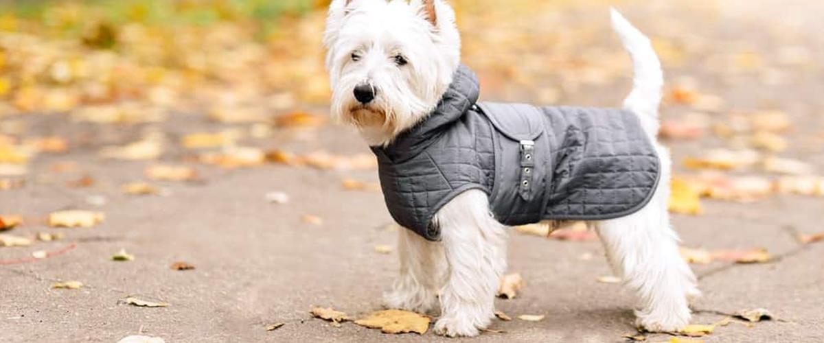 ¿Es necesario usar ropa para mascotas en invierno?