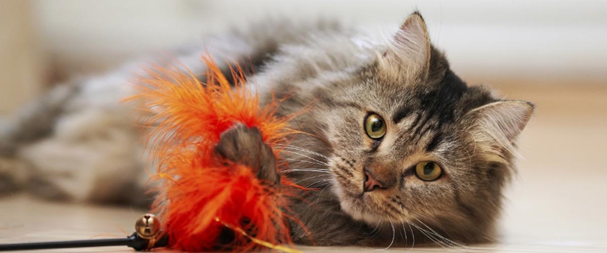 ¿Por qué los juguetes para gatos son necesarios?