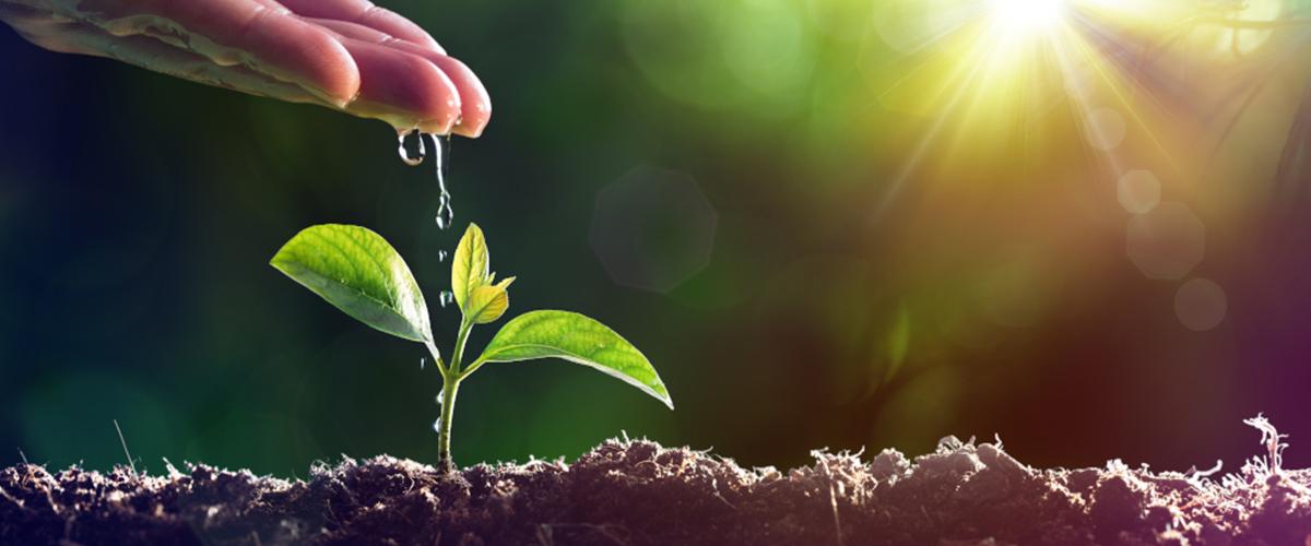 Cómo preparar la tierra para la siembra del huerto urbano