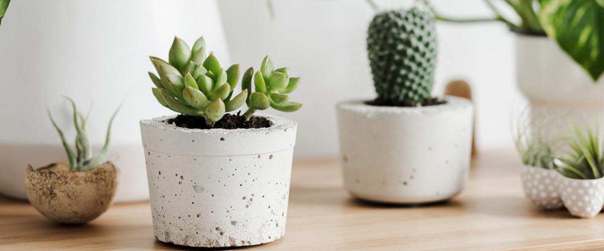 Consejos para comprar el macetero ideal para plantas y decoración