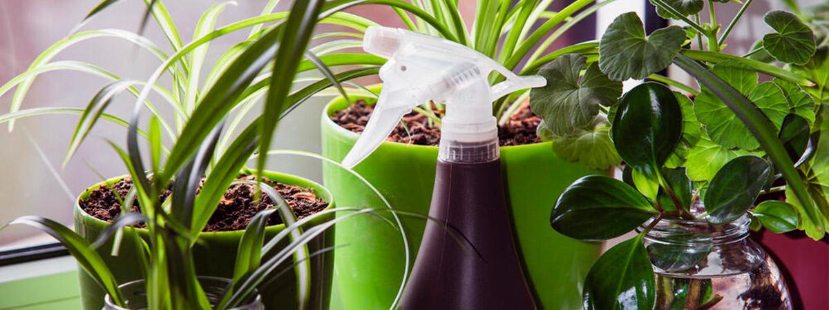La lista de consejos definitiva para pulverizar plantas