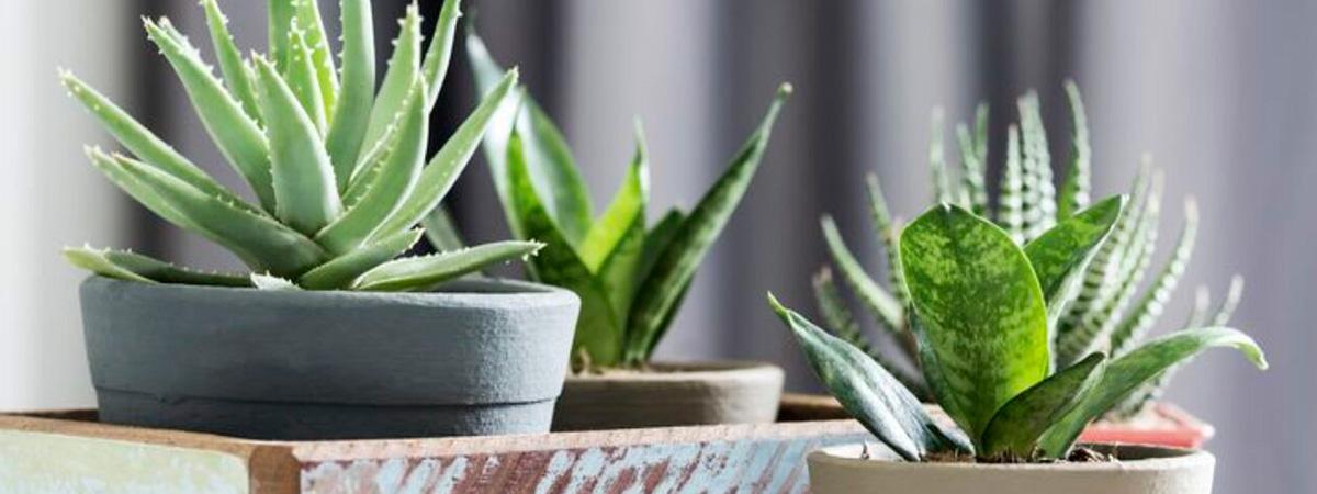 Plantas y huertos urbanos que mejoran la calidad del aire