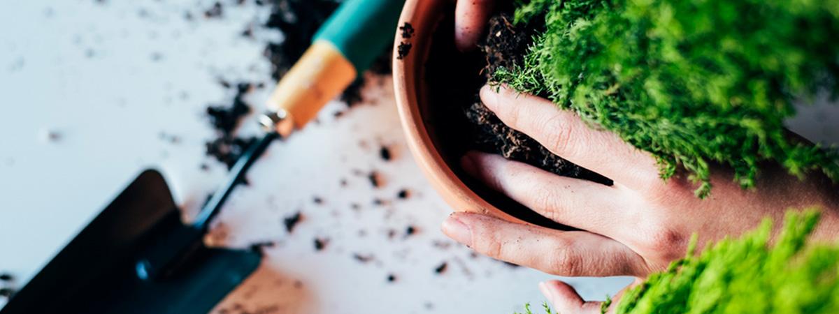 Lo que no sabes sobre cuidar plantas de interior